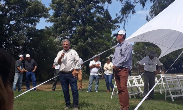 Stine Seeds speeds up its commercial strategy in Argentina