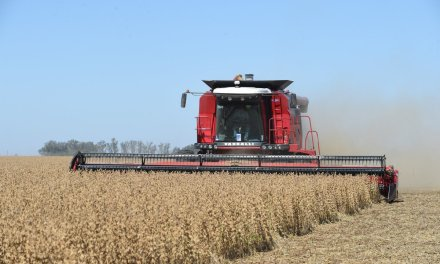 A largest soybean and corn harvest is now expected