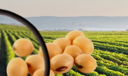 Knowledge based economy law in Argentina:  Opportunities for AgBiotechnology entrepreneurs