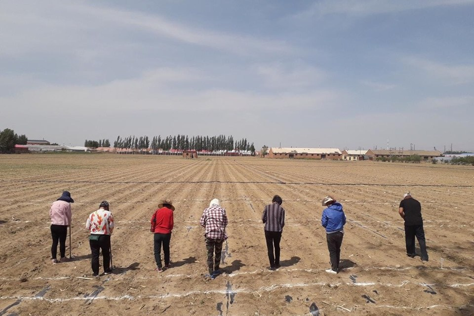 For the first time, Don Mario's soybean varieties were planted in China