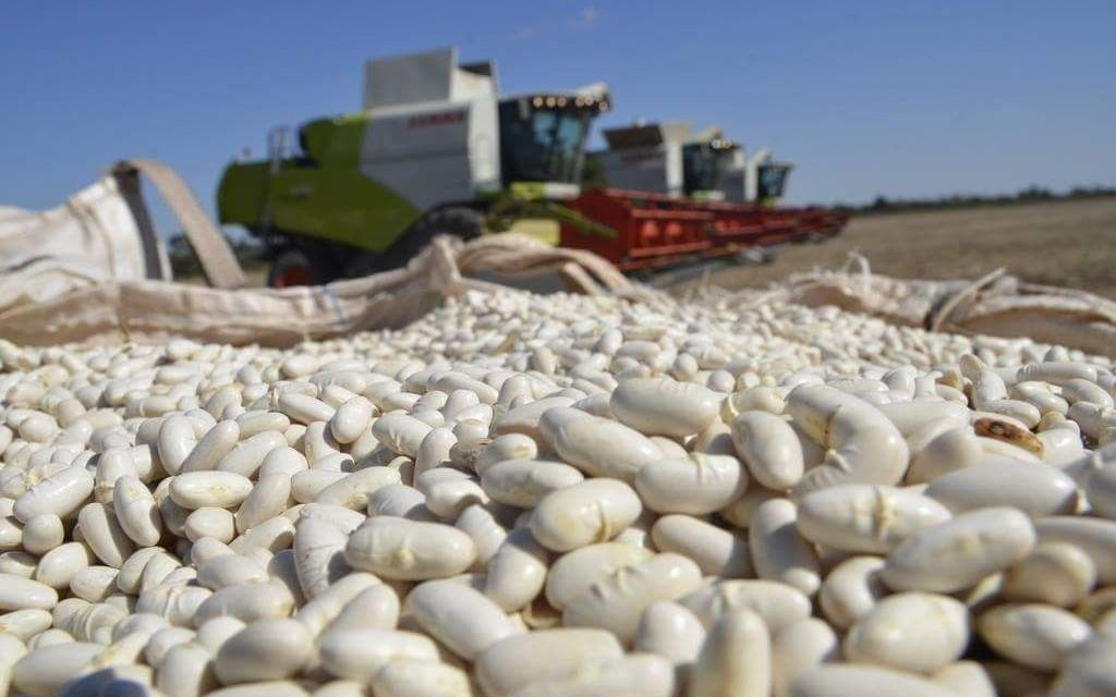 Who lead the export of pulses in Argentina?
