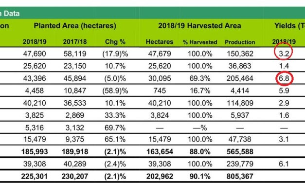 Adecoagro's yields in soybean, wheat and corn, below national averages