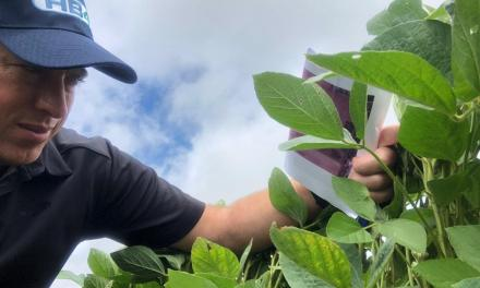 USDA approves the first Latin American GMO trait: the HB4 soybean