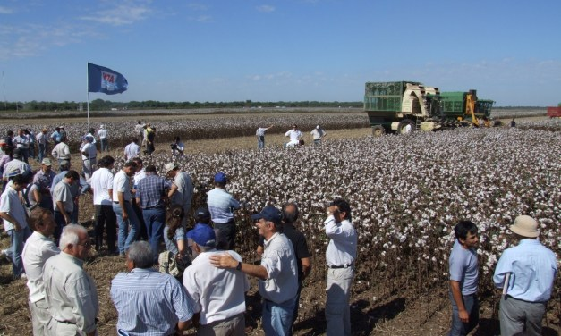 The strange case of illegal cotton seed in Argentina: why biotech companies are not being informed?