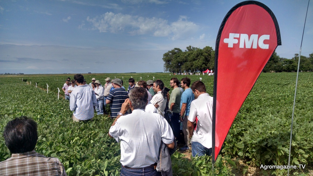 FMC Corporation to Acquire Fluindapyr Active Ingredient Assets from Isagro