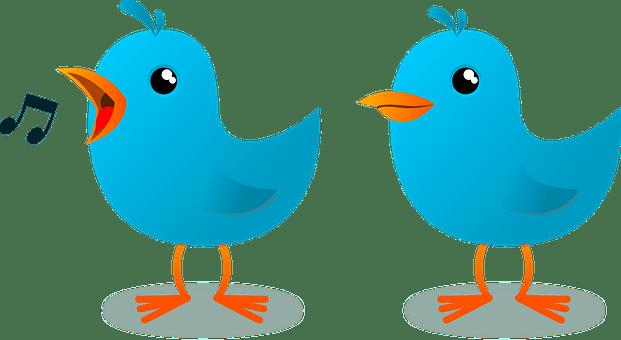 Cómo conseguir seguidores en Twitter y trinar como un pajarito