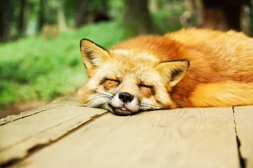 Si no conseguimos la atención de nuestro público, pueden caer en sueño REM