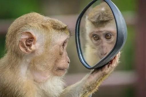 Mirarse al espejo no es tan sencillo