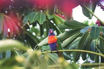 Un agaporni posado en una rama