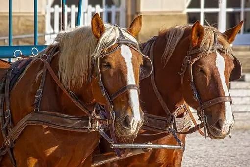 Caballos y carruaje (tampoco hay que irse a los extremos con los medios de transporte alternativos)