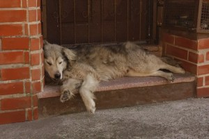 Un perro descansando. Todos podemos tener un mal día.