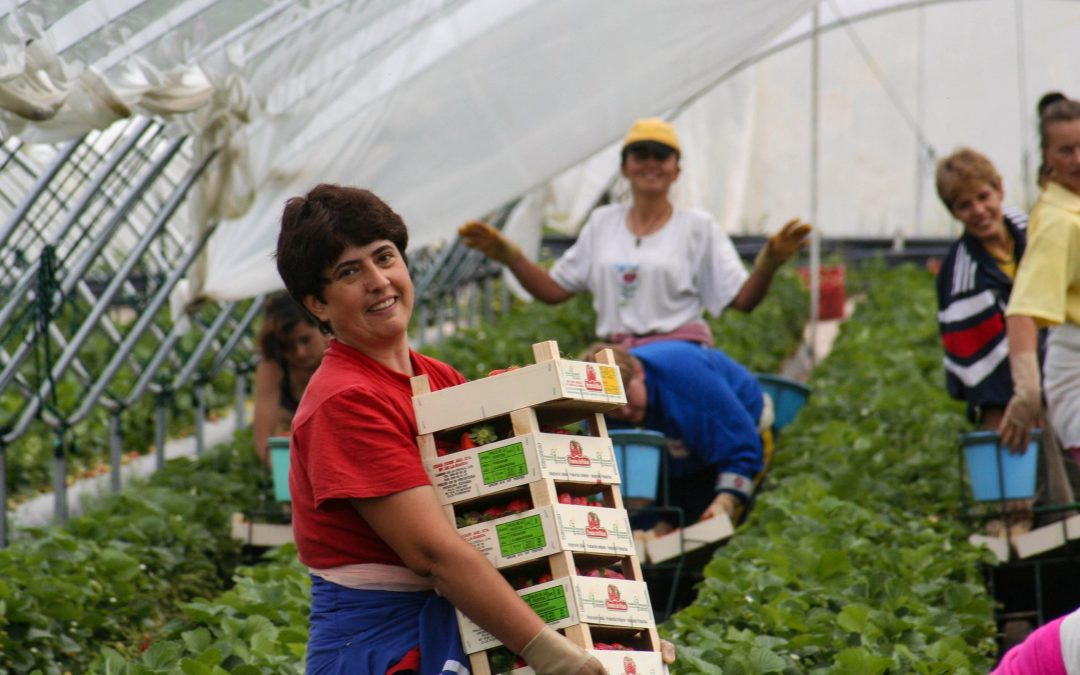 Failure of CAP trilogue negotiations is a missed opportunity. EFFAT's fight for a CAP that delivers for farm workers continues