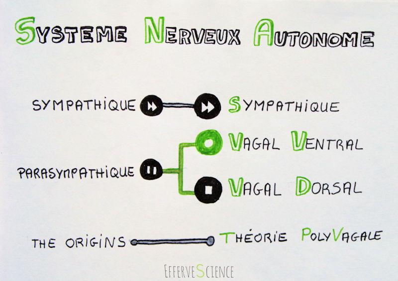 Théorie PolyVagale, le nouveau Système Nerveux Autonome