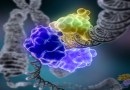 le cancer, alimentation et caner, nutrition et cancer, nourriture et cancer, les aliments transformés