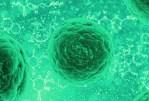 Les cellules souches – vers un traitement de nombreuses maladies graves