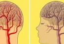 cerveau, Maladies d'Alzheimer, comment s'alimenter, alimenter notre cerveau