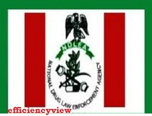 NDLEA Applicant Register Login Portal | how to sign up/login to create account successfully