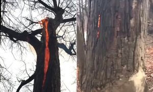 "US hikers encounter a scary ""devil tree"" burning from the inside only (Photo + Video)"
