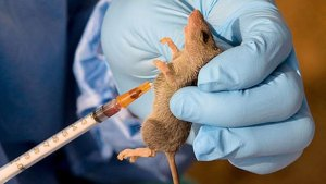 , Ogun shuts down hospitals over Lassa Fever, Effiezy - Top Nigerian News & Entertainment Website