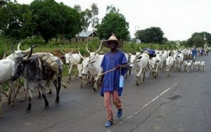 Herdsmen: Grazing, cattle ranching private business – Yoruba elders tell FG