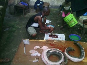 See how young men capture huge snake in Calabar, prepare it as a meal (Graphic Photos)