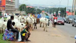 Senate orders cows found loitering in Abuja City Centre to be slaughtered