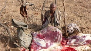 , Man arrested after hunting and killing an antelope in Bauchi game reserve (Photo), Effiezy - Top Nigerian News & Entertainment Website