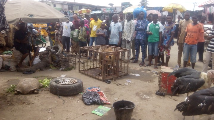 , Live Display of Animals at Okoko market in Lagos, Effiezy - Top Nigerian News & Entertainment Website