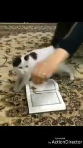 Cat refuses to step on Quran but steps on another book (Video)