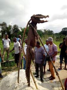 See the Big Crocodile Caught In Imo State At Ota-mmiri River, Ihiagwa (Photos)