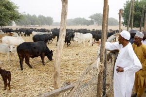 President Buhari spends time in his farm (Photos)