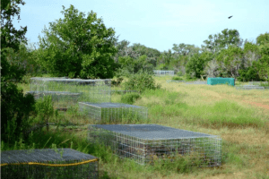 Inside the Texas body farm where corpses rot in the open to help solve murders