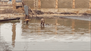 See Where Slaughtered Goats Are Washed In Water Containing Faeces In Lagos (Photos)