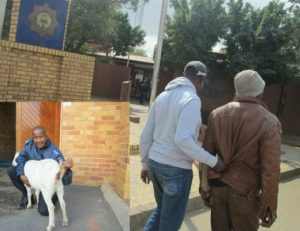 South African Man Arrested For Raping His Neighbour's Pregnant Goat (Graphic Photos)