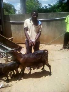 """""""I sought her consent first"""" – Malawian Man Arrested For Raping A Goat Says (Photo)"""