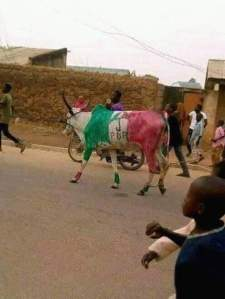 150 Cows Slaughtered Ahead Of Atiku's Rally In Kano – Twitter User Claims