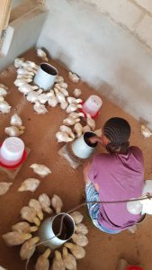 Nigerian lady builds successful poultry farm, shares secrets on social media