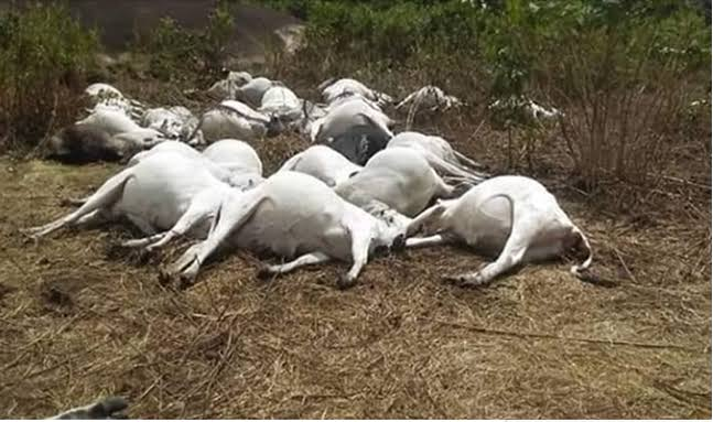 , Monarch warns residents on meat consumption as 30 cows die mysteriously in Ondo, Effiezy - Top Nigerian News & Entertainment Website