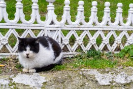 The cats of Istanbul