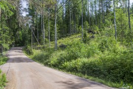 Path to the entrance of the Nuuksio National Park
