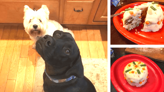 Learn how to make a Homemade Cake for Your Dog! Our fur babies deserve a cake for their special occasions too. Get this simple recipe for a doggie cake you can make yourself.