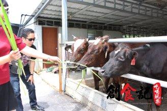 创食记 @ Sinar Eco Resort Pekan Nanas Johor Malaysia Family Gathering Camp Travel Adventure Tourist Attraction