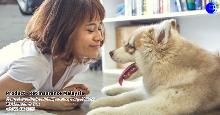 Pet Insurance Malaysia Johor Batu Pahat Agensi Pekerjaan Unilink Prospects SB Wisma V Cat Insurance Malaysia Dog Insurance Malaysia Johor Batu Pahat Your pet is part of your family Insure your pet today A00