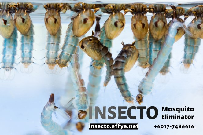 18955884 - close up mosquito pupae and larvae underwater