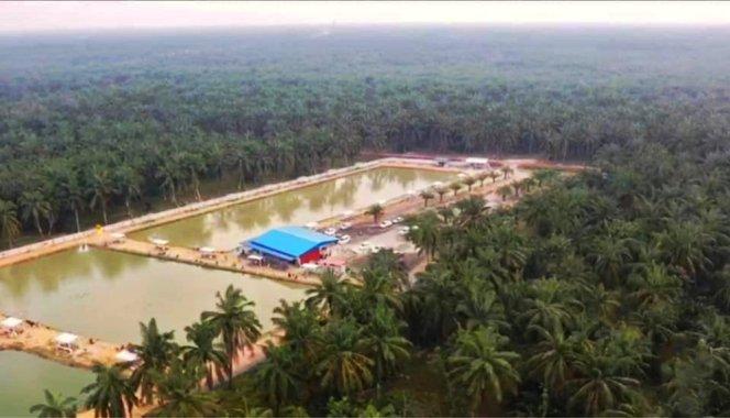 Kolam Memancing Simpang Sikon - Kolam Memancing Ikan Parit Raja Batu Pahat Johor Malaysia B06