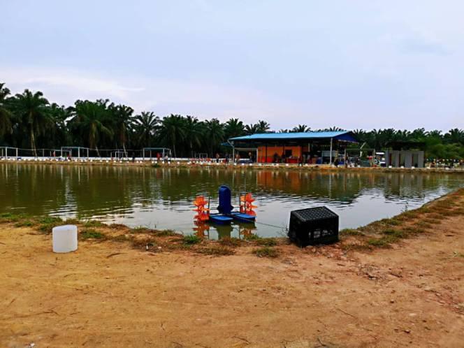 Kolam Memancing Simpang Sikon - Kolam Memancing Ikan Parit Raja Batu Pahat Johor Malaysia B08