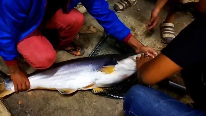 Kolam Memancing Simpang Sikon - Kolam Memancing Ikan Parit Raja Batu Pahat Johor Malaysia B21