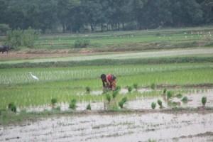 Farming at Jharkhand