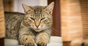 Is Fancy Feast Good for Cats