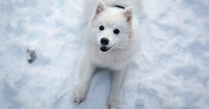 top 25 dog blogs 2